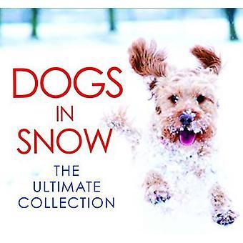 Chiens dans la neige-The Ultimate Collection-9781785300004 livre