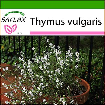 Saflax - 200 seeds - With soil - Common Thyme - Thym commun - Timo - Tomillo   - Echter Thymian