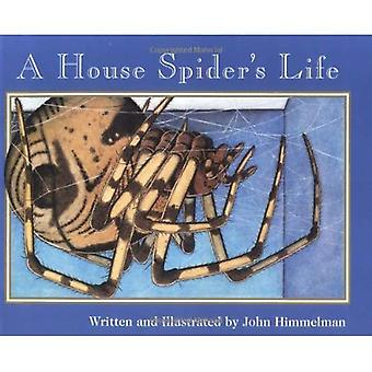 A House Spider's Life (Nature Upclose)