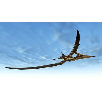 Pteranodon bird flying in blue sky Poster Print