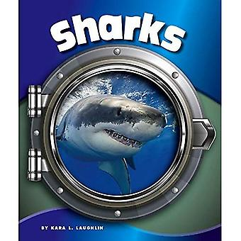 Sharks (In the Deep Blue Sea)