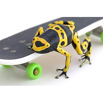 Frog On A Skateboard PosterPrint