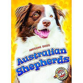 Bergers australiens (chiens génial)