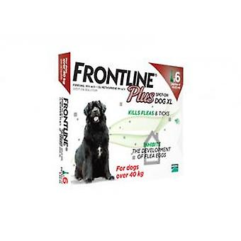Frontline Plus Spot på ekstra store hund 40-60kg 6 pipetter