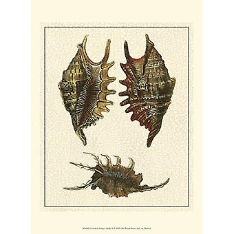 Crackled Antique Shells V Poster Print by Denis Diderot (10 x 13)