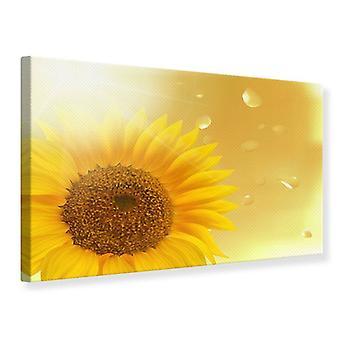 Leinwand drucken Sonnenblume im Morgentau