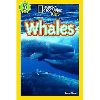 Whales (Level3) (National Geographic Kids Readers (Level 3))