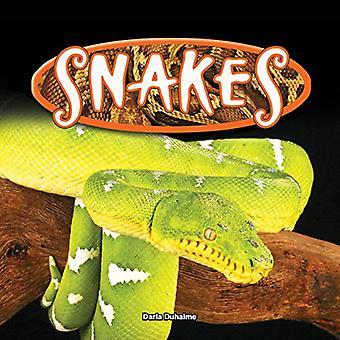 Snakes (Reptiles!)
