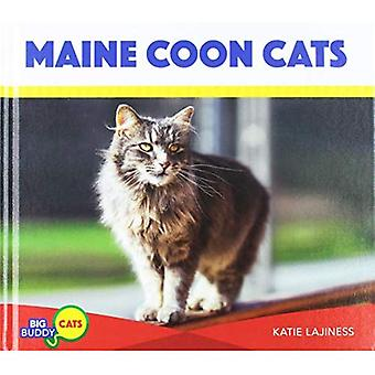 Maine Coon Cats (Buddy gros chats)