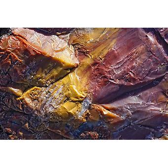 Close Up van versteend hout Petrified Forest National Park Utah PosterPrint