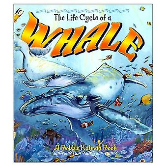 The Life Cycle of a Whale
