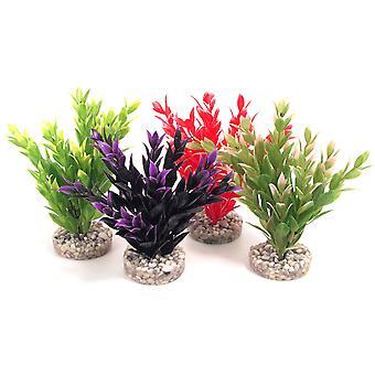 Couleur Sydeco plantes Fiesta Ruscus 18cm (Pack de 8)