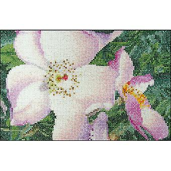 Rose New Face On Aida Counted Cross Stitch Kit-6.75