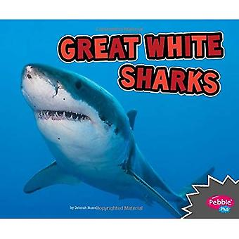 Great White Sharks (All about Sharks)