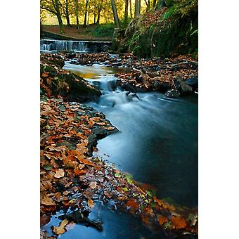 Stream with Autumn Leaves Forest of Dean UK Poster Print by David Slater