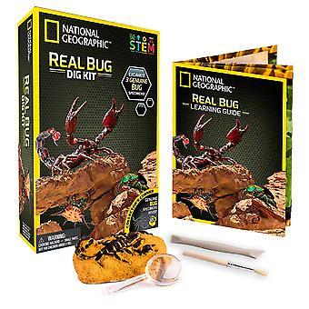 National Geographic NGBUG Real Bug Dig Kit