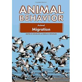 Animal Migration (comportement Animal)