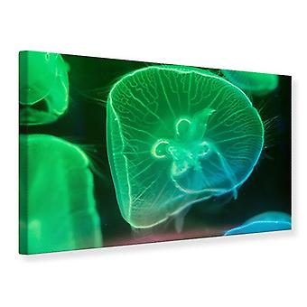 Canvas Print Jellyfish In Light