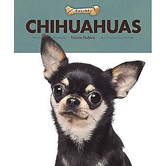 Chihuahuas (Fetch!)