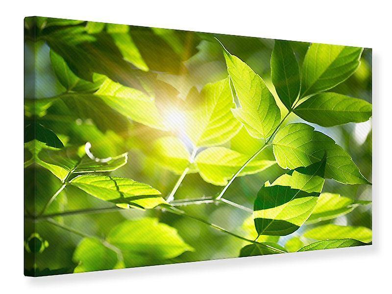 Impression de toile Visez vert
