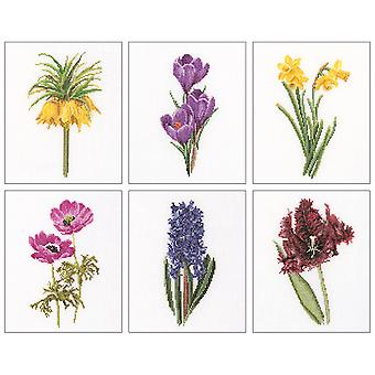 Floral Studies 3 On Aida Counted Cross Stitch Kit 6 3 4