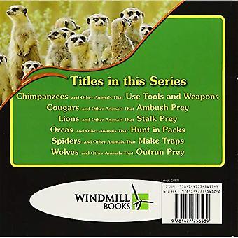 Späckhuggare och andra djur som jagar i förpackningar (Awesome djur färdigheter)