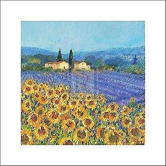 Lavender And Sunflowers Provence Poster Print by Hazel Barker (16 x 16)