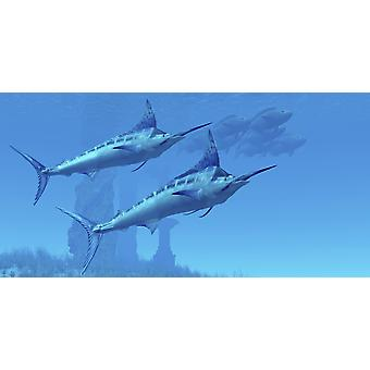 Two sleek Blue Marlins swim close to a school of fish near some ocean ruins Poster Print