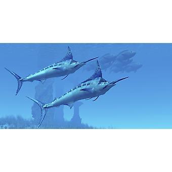 Två snygga Blue Marlins simma nära en skola av fisk nära vissa ocean ruiner affisch Skriv