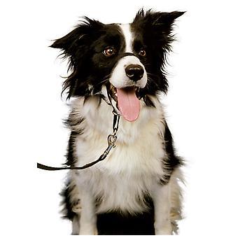 Halti Headcollar Dogs Size 2, M Size, Guaranteed To Stop Pulling Black Original