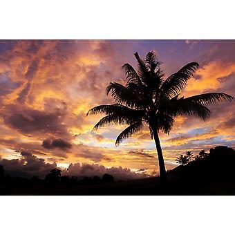 フィジーのビティレブ島の日の出とココナッツのヤシの木 PosterPrint
