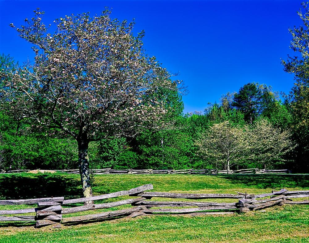 Blossom trees in farm Davidson River Campground Pisgah National Forest Brevard North voitureolina USA Poster Print by Panoramic Images (28 x 22)