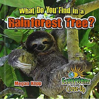 What Do You Find in a Rainforest Tree? (Ecosystems Close-Up)
