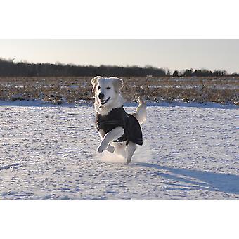 Kruuse Rehab Dog Cover Blanket Softshell Dachsund 42cm