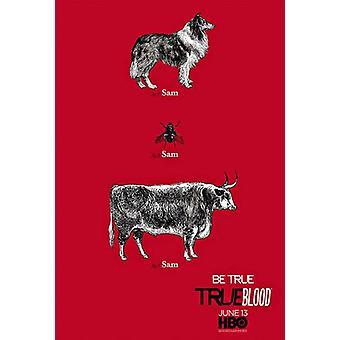 True Blood film plakat (11 x 17)
