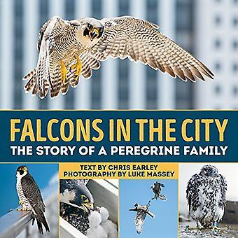 Falcons i staden: berättelsen om en Peregrine familj