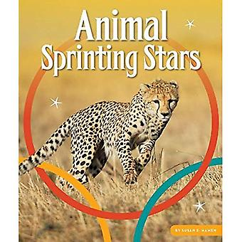 Animal Sprinting Stars (Animal Olympics)