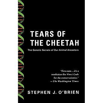 Tränen des Geparden: die genetischen Geheimnisse unserer tierischen Vorfahren