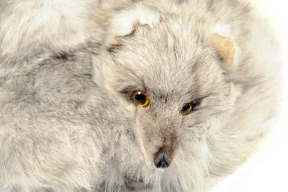 Waooh - Fur - scarf around Fox