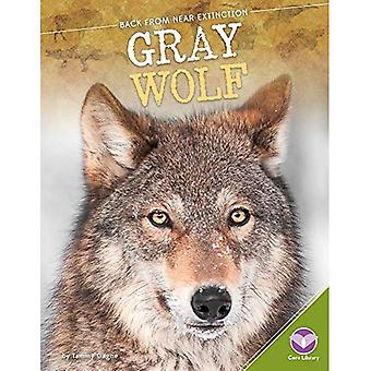 Gray Wolf (Back from Near Extinction)