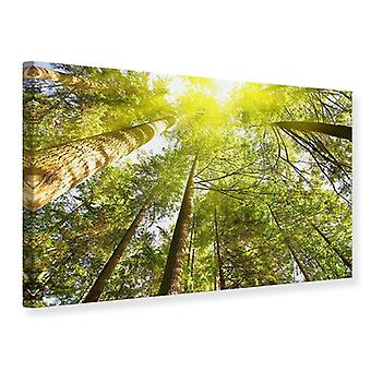 Canvas Print Treetops In The Sun