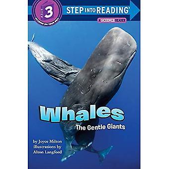 Baleias: Gentle Giants (passo-a-leitura)