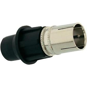 F-CONNECTOR MALE, METALLIC INCL. CAP