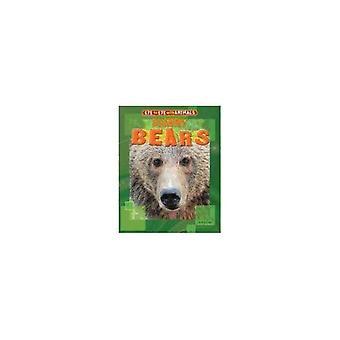 Muskulös björnar (öga mot öga med djur)