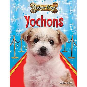 Yochons (Designer Dogs)