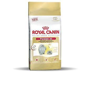 رويال كانين القط الغذاء الفارسية كيتتن 30 10 كجم