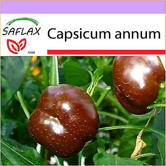 Saflax - 10 seeds - Pepper - Sweet Chocolate x - Paprika - Sweet Chocolate X - Peperoncino Sweet Chocolate - Pimiento sweet chocolate - Paprika - Sweet Chocolate x