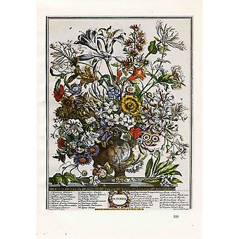 Roberty Furber - Twelve Months of Flowers October Poster Print Giclee