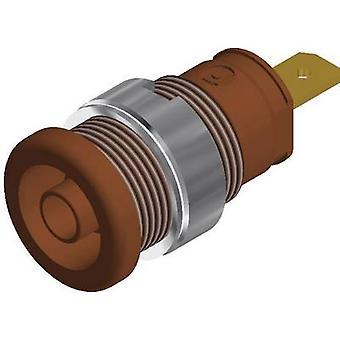 Safety jack socket Socket, vertical vertical Pin diameter: 4 mm Brown