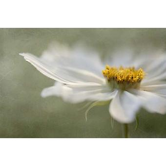 Whisper Poster Print by Mandy Disher
